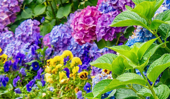 WSA-bloggen: Glöm inte att vårda din trädgård!